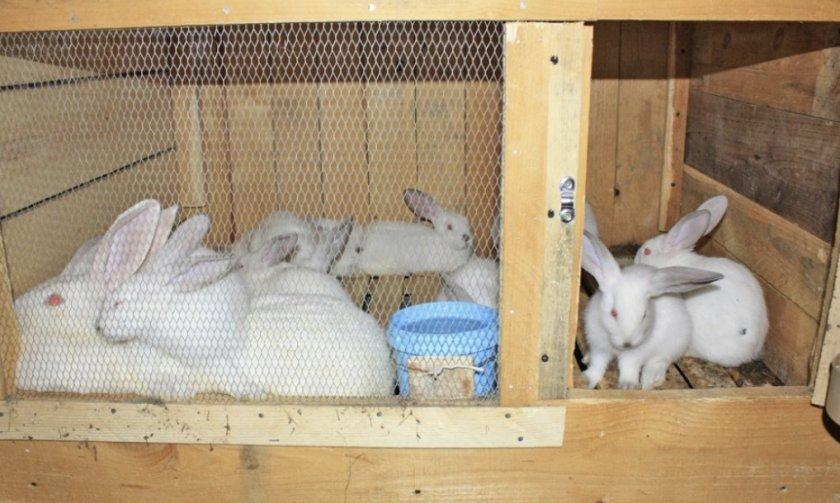 Крольчата и крольчиха