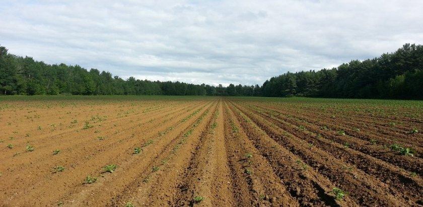 Земельный конфликт в Черновицкой области закончился смертью директора кооператива