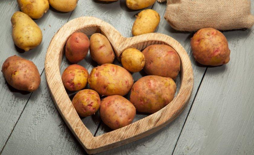 Урожай картофеля сорта Свитанок Киевский