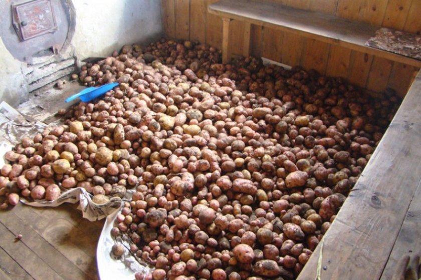 Сушка картофеля