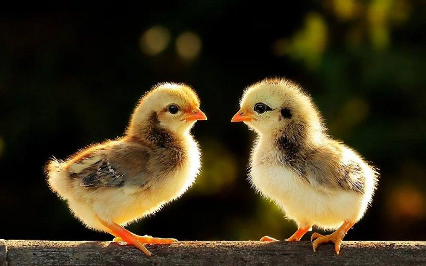 В Англии соседей «достали» запахи птицефермы