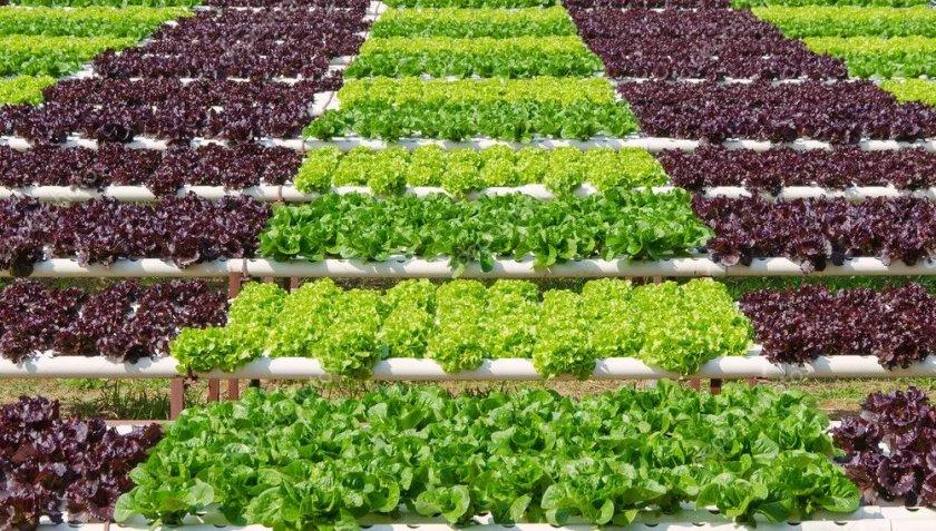 Тунис выходит на мировой уровень в развитии органического сельского хозяйства
