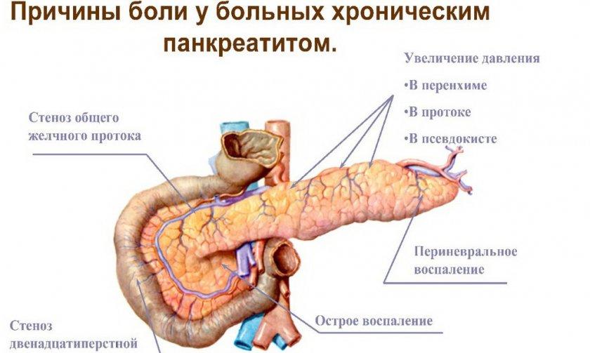 Спаржа при панкреатите