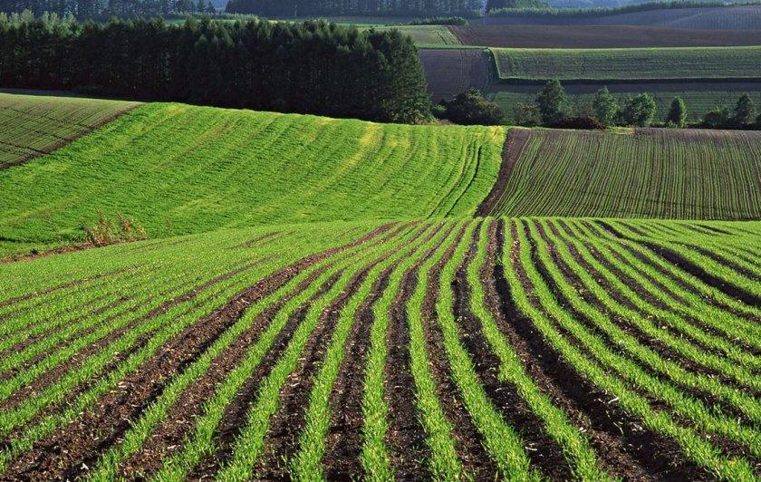 Компания Агросетон планирует увеличение посевных площадей