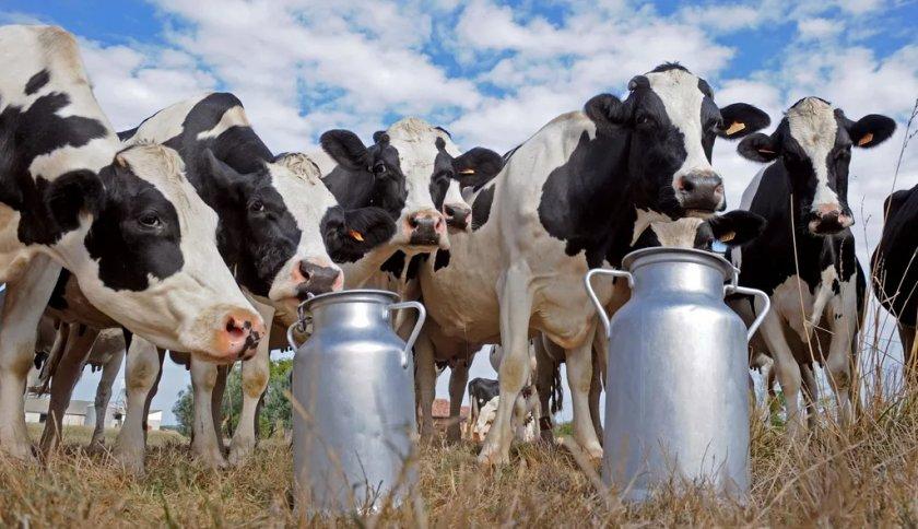 Североирландские фермеры против «необъявленных проверок»