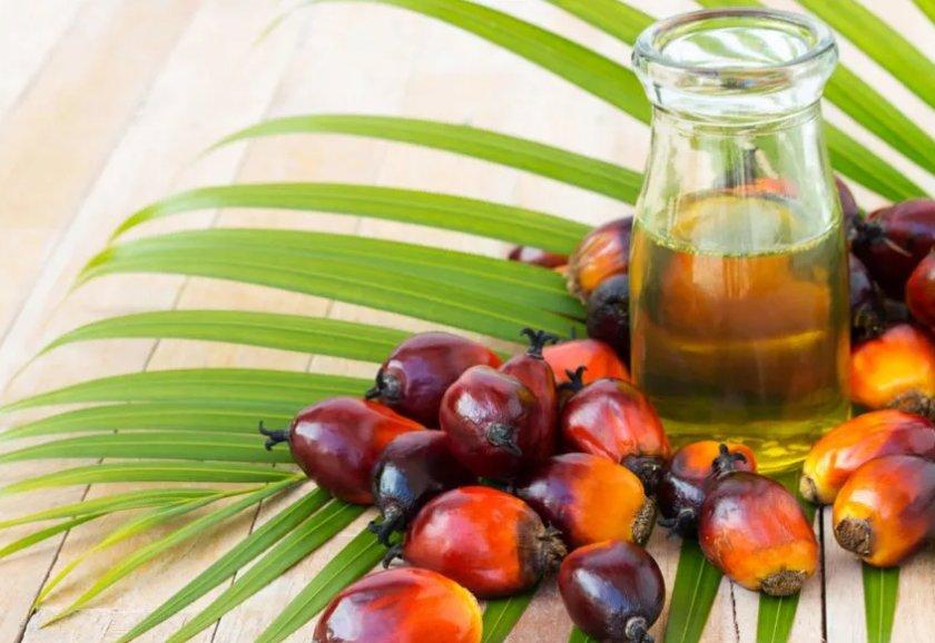 Индонезия подталкивает пальмовые компании к судебным искам против ЕС