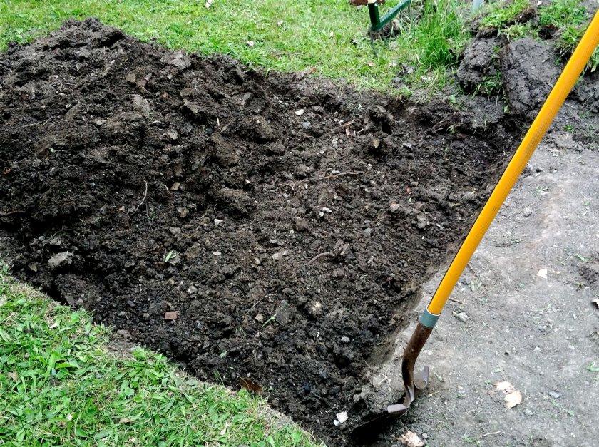 Перекопка почвы перед посадкой картофеля