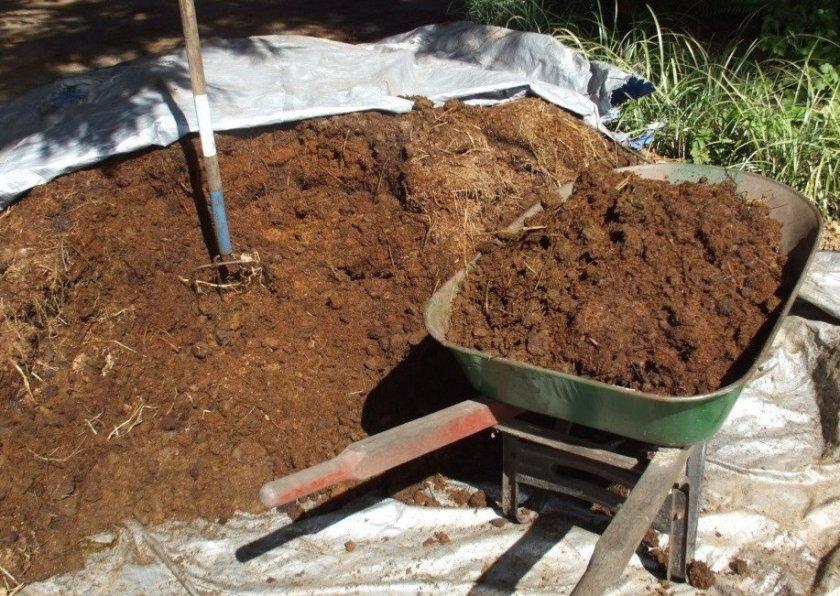 Внесение перегноя под посадку картофеля