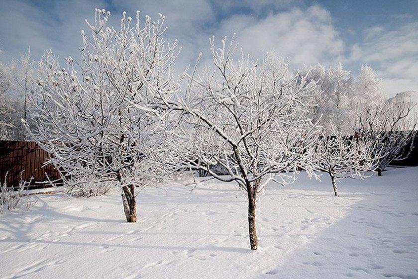 Яблоневый зимний сад