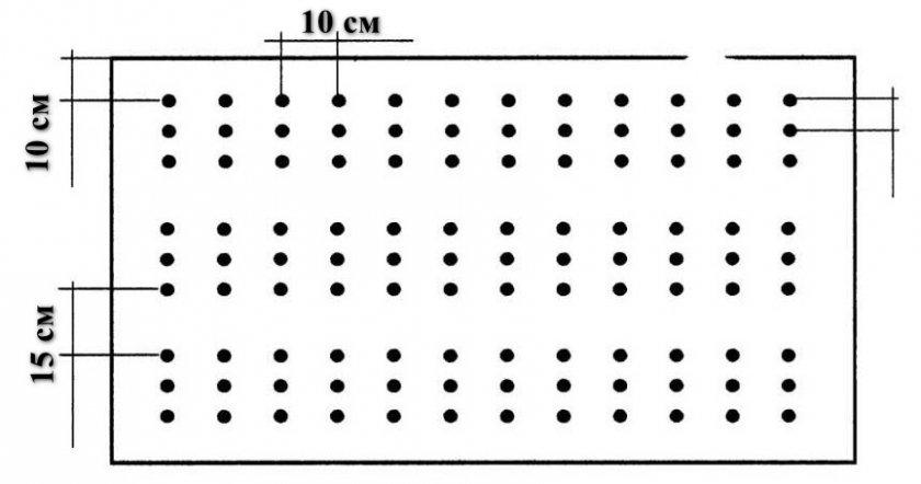 Схема посева семян лука