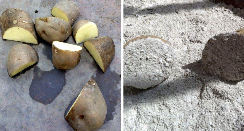 Подготовка картошки к посадке