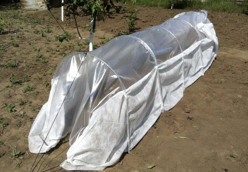 Укрытие посевы капусты