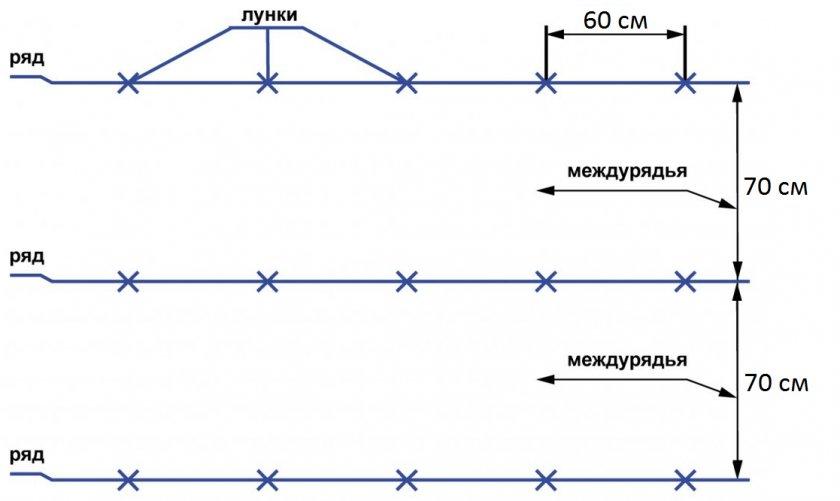 Схема посадки капусты