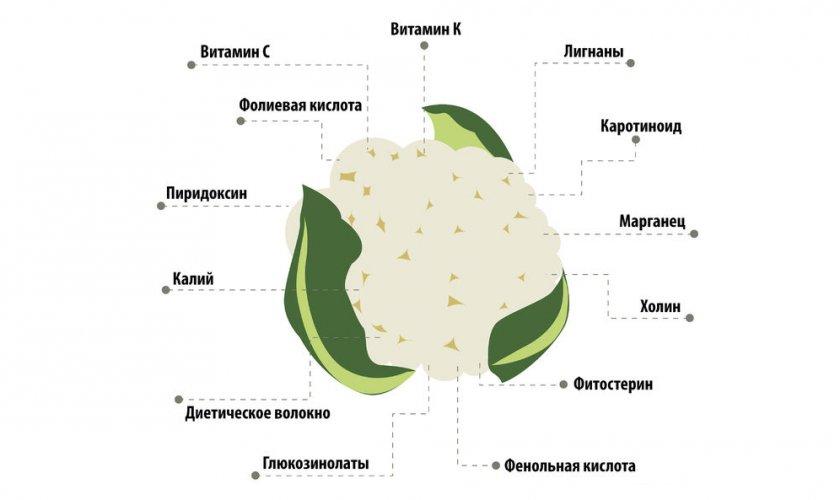 Витаминный состав цветной капусты