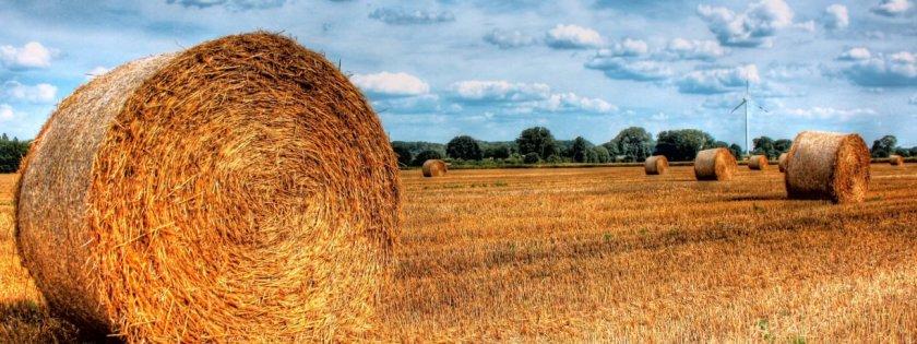 Топливные брикеты из соломы производят в Черкасской области