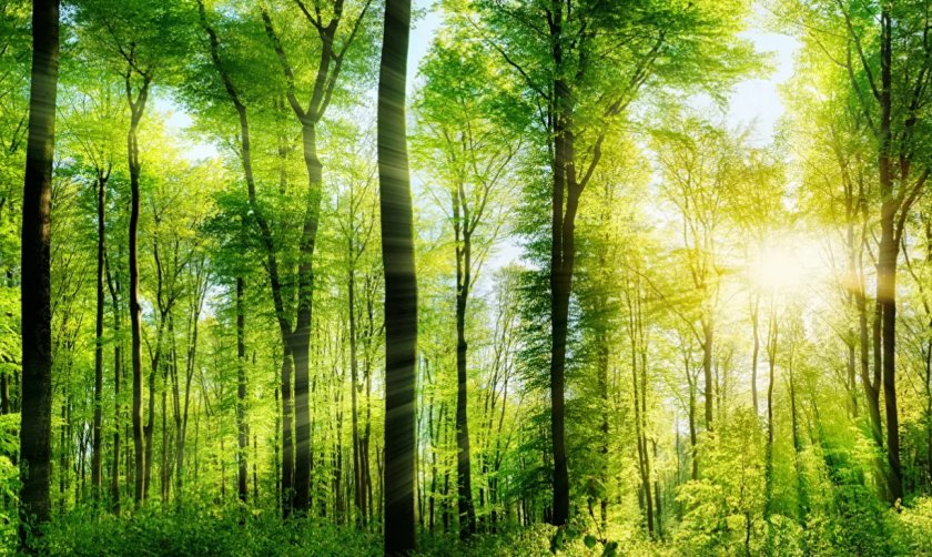 Битва за лес: в Николаевской области подрались лесники и глава ОТО