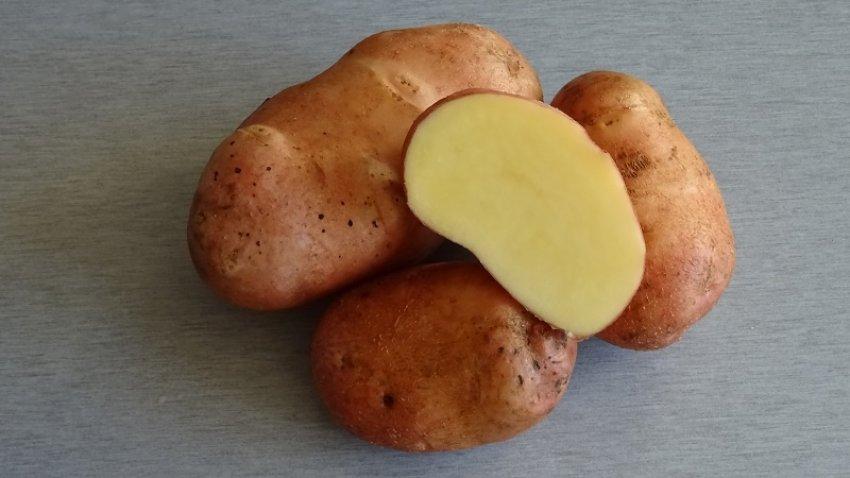 Картофель Астерикс