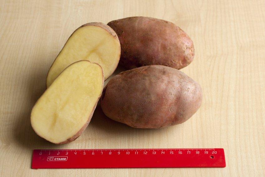 Картофель Здабыток