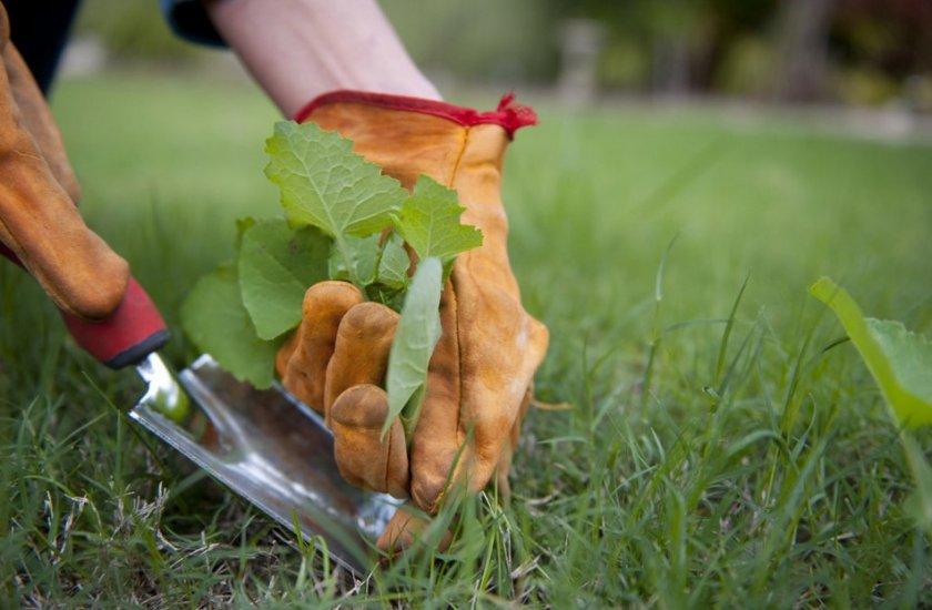 Удаление сорной растительности