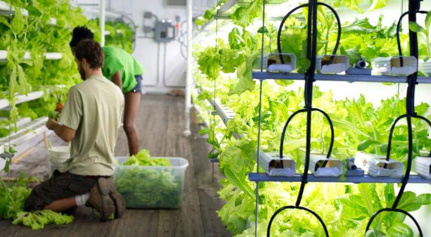 Британскими учёными разработаны новые «контейнерные фермы»