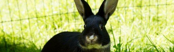 Какую траву надо давать кроликам