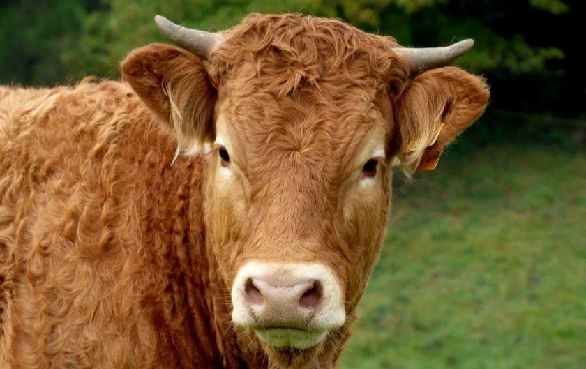 В Великобритании суд на круглую сумму оштрафовал поставщика мяса для супермаркетов