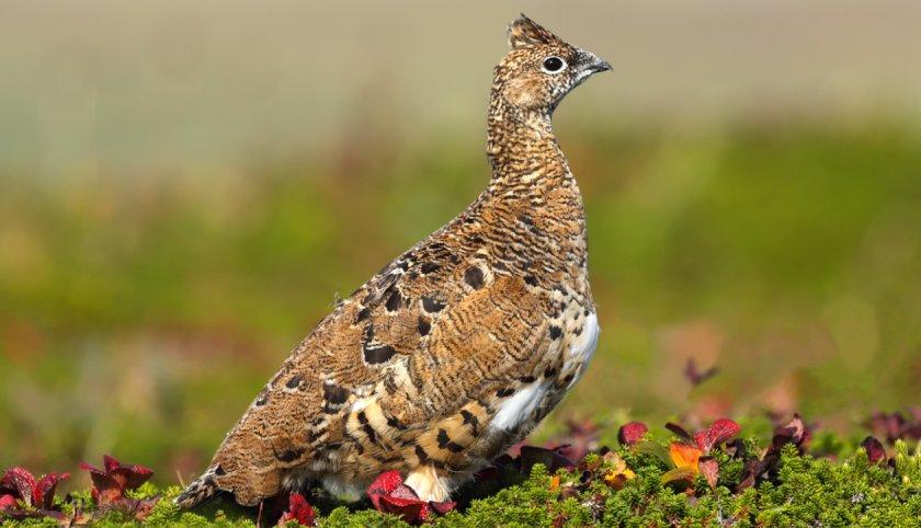 Запорожская прокуратура открыла дело по факту массовой гибели птиц и животных