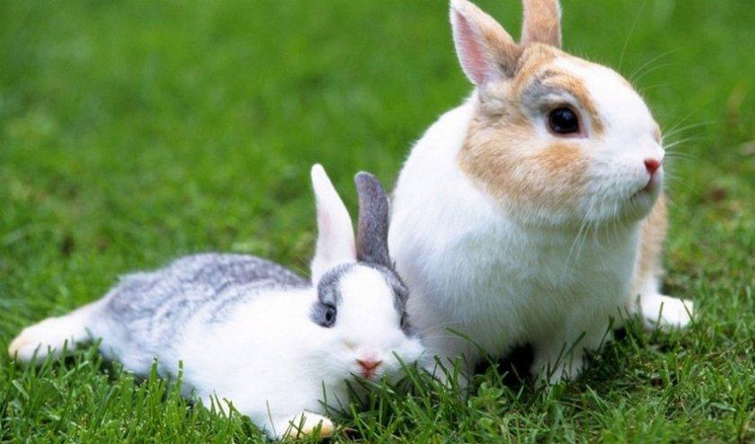 Трава для кроликов