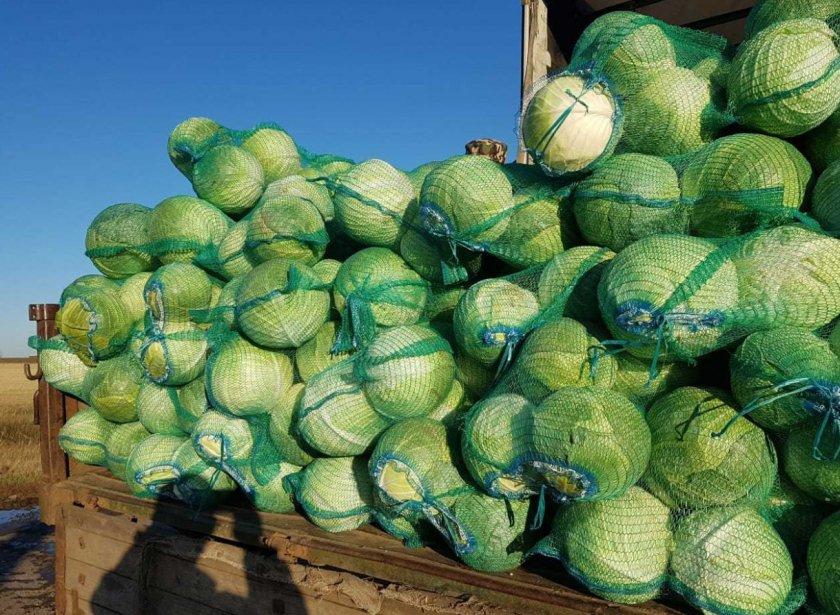 Сбор урожая капусты Крауткайзер