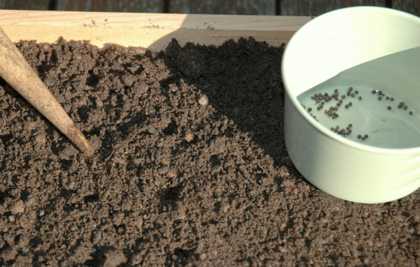 Посев семян на рассду