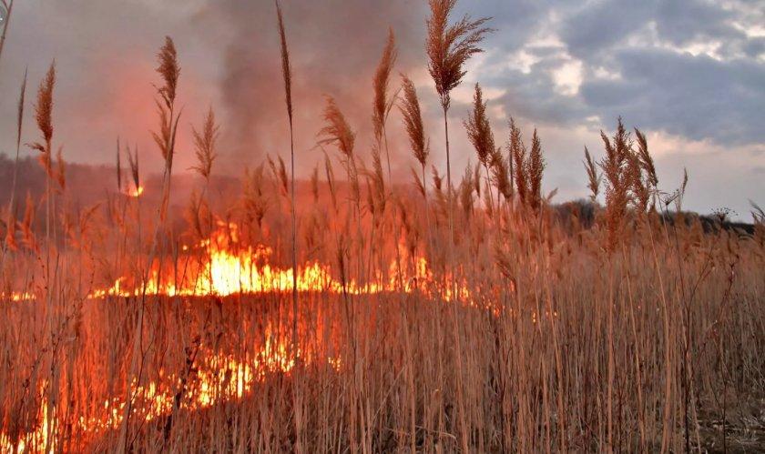 Новозеландский фермер требует компенсации за исполосованную во время пожара землю