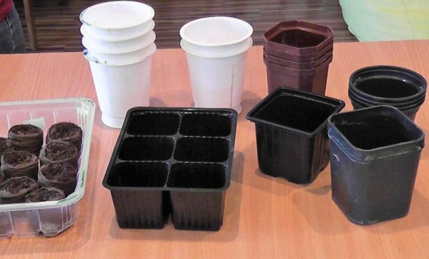 Пластиковые контейнеры для рассады капусты