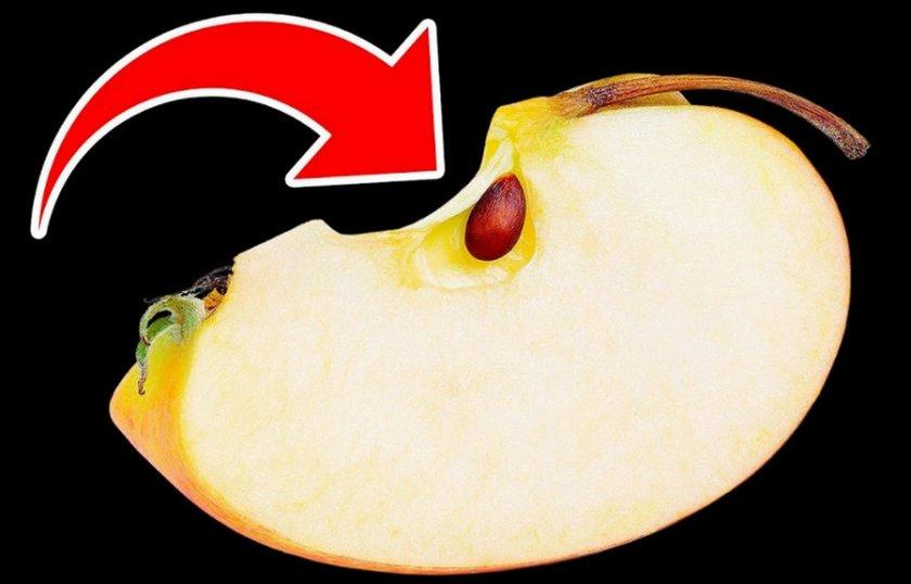 Яблочная семечка