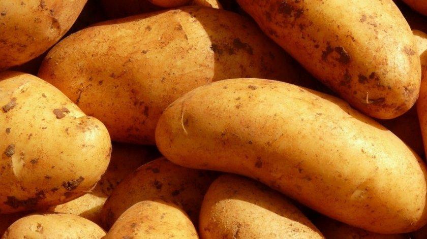 Урожайность картофеля Лидер