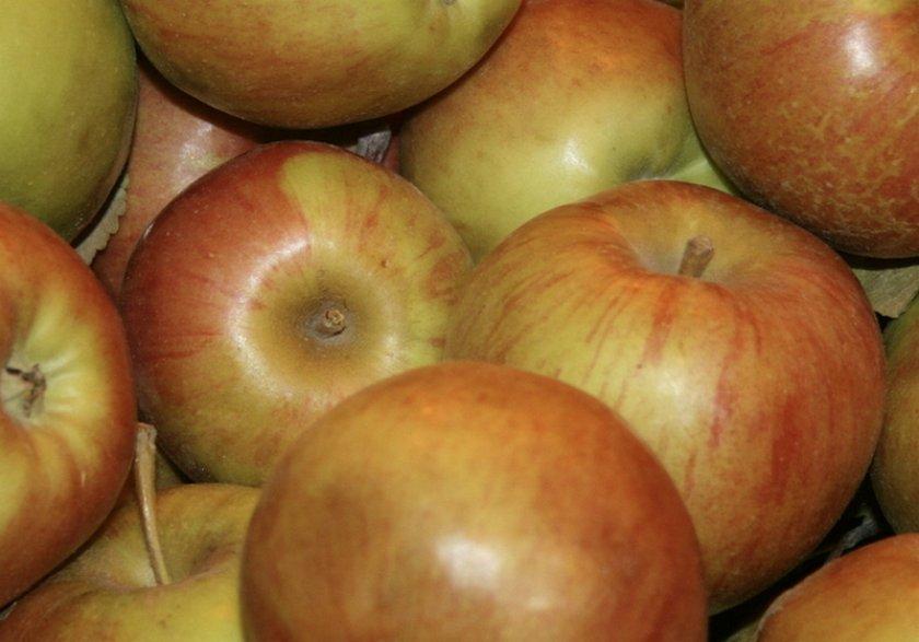 Урожай яблони Вербное
