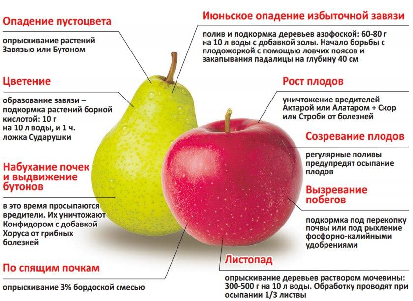 Правила ухода за яблоней