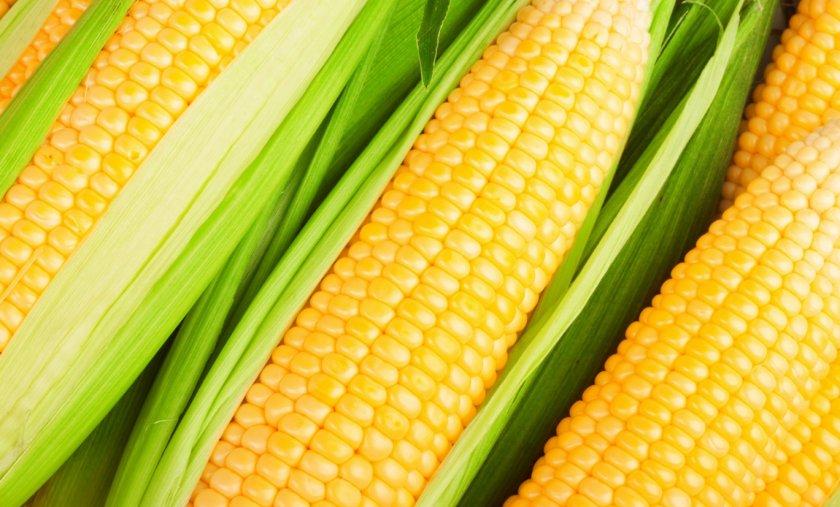 Органическое сельское хозяйство смягчает изменение климата