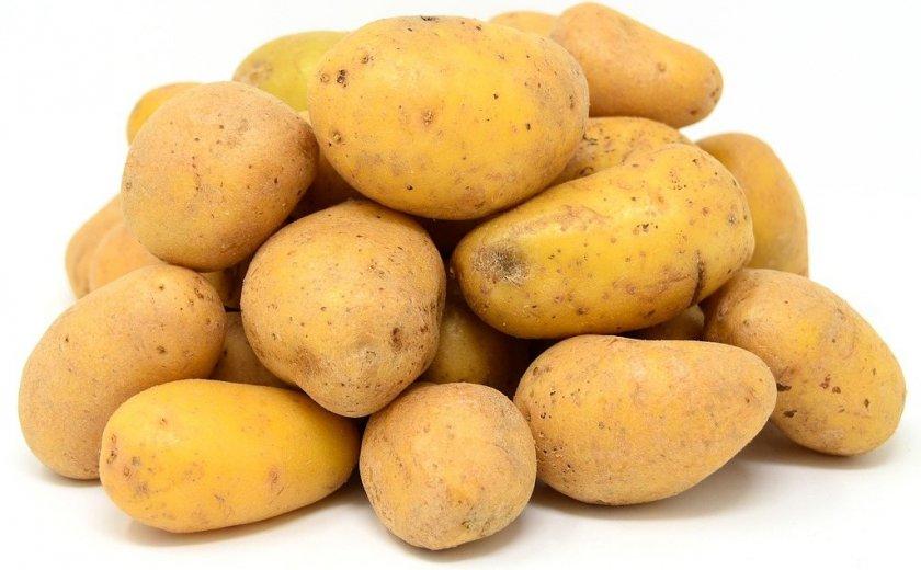 Картофель Чайка