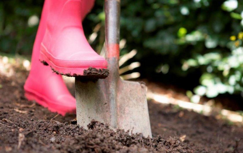 Подготовка почвы для посадки картофеля