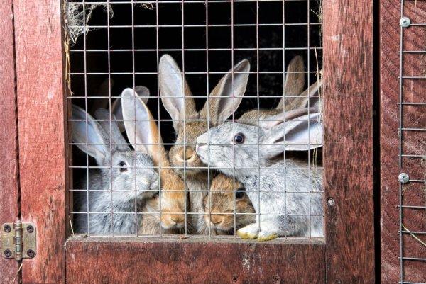 Пол в вольере для кроликов