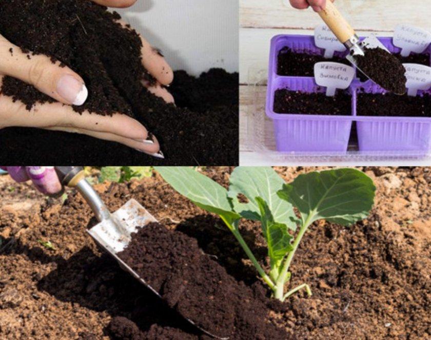 Мульчирование почвы рассады капусты