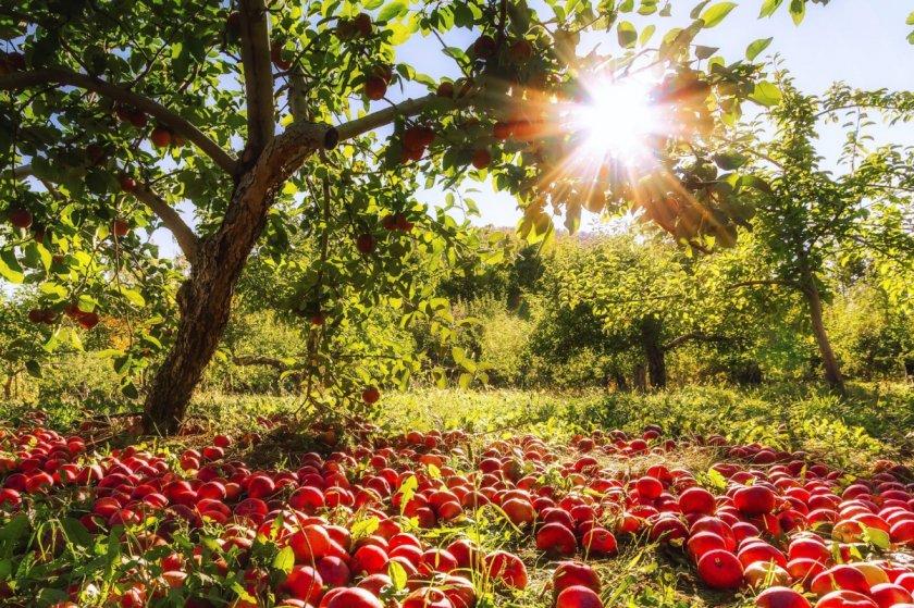Испанские слизни наступают: в опасности сады и огороды Украины