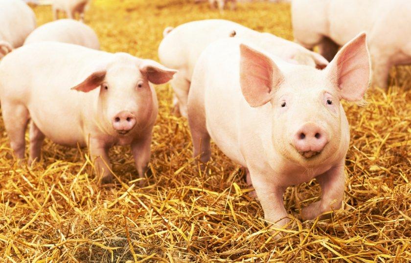 Ферму с быками организовала переселенка из зоны АТО