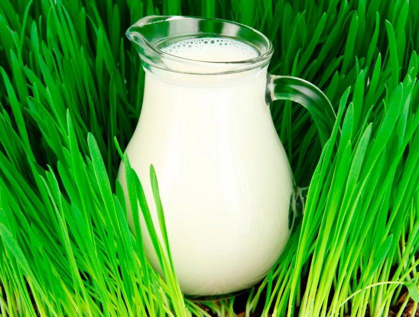 В Великобритании возобновлено финансирование программы «школьного молока»