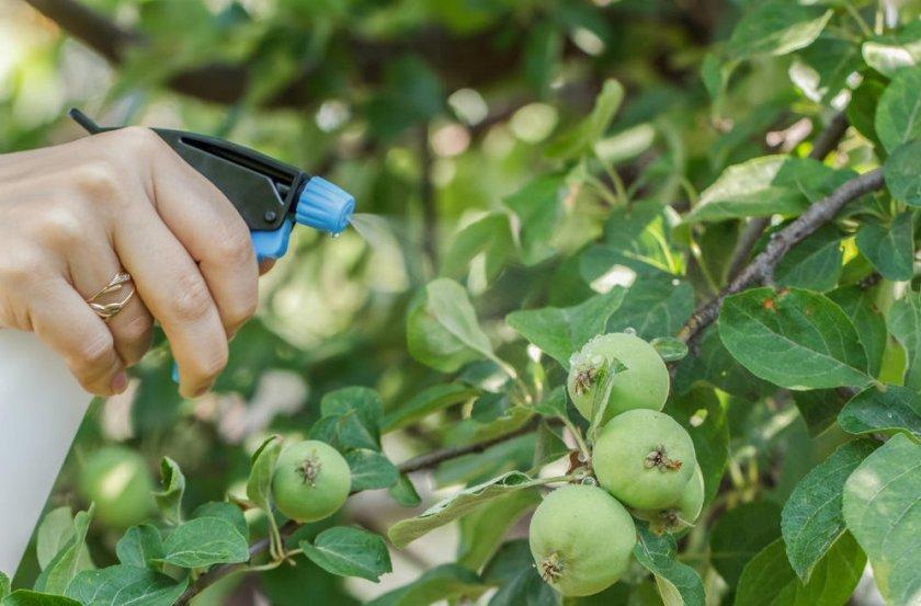 Внекорневая подкормка яблони (опрыскивание)