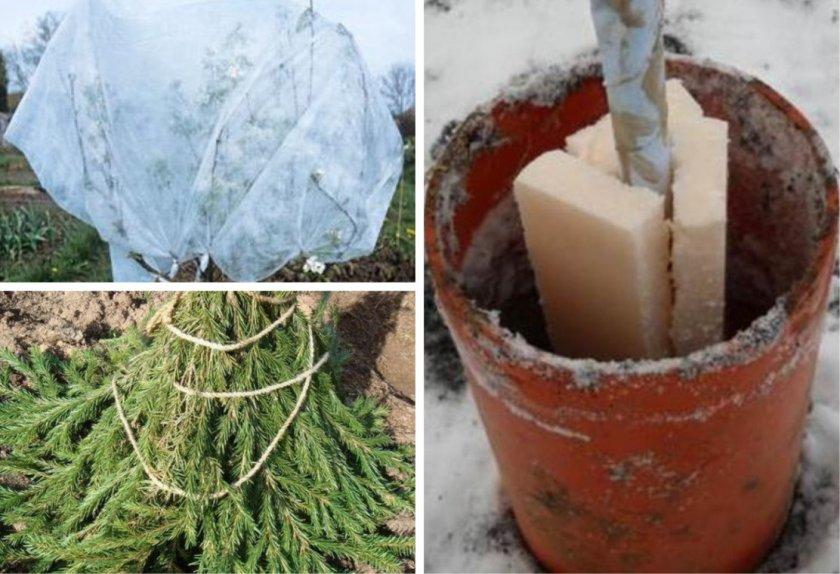 Подготовка яблони к зимовке