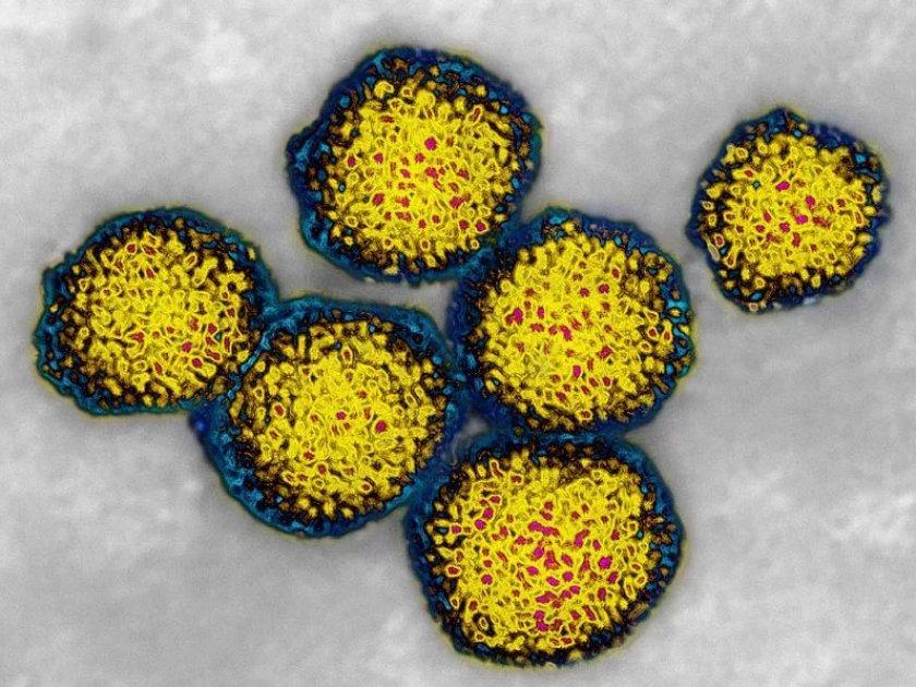 Вирус гепатита утят
