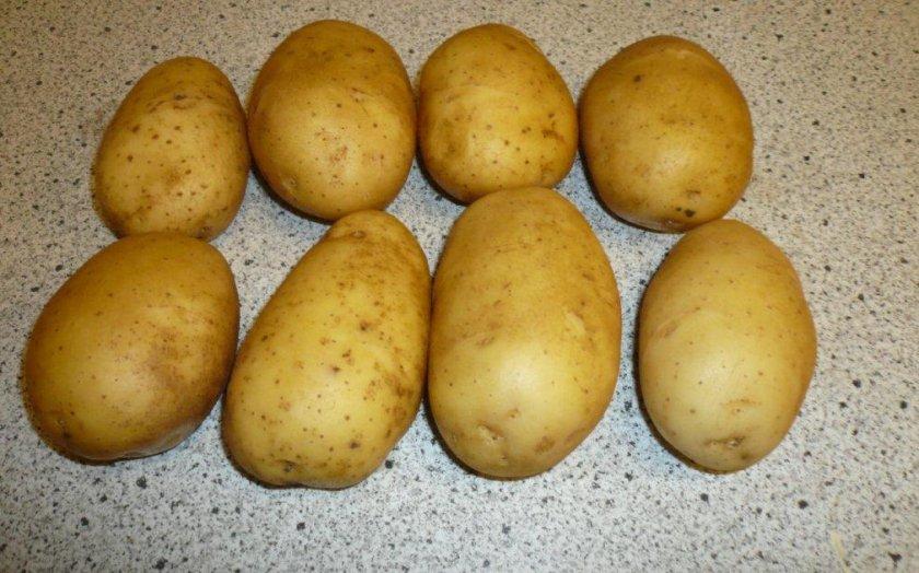 Картофель Голландка