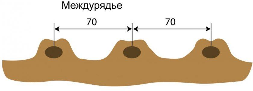 Посадка картофеля гребневым методом