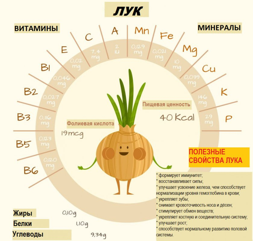 Витаминный состав лука